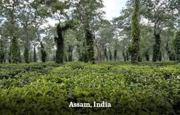 assam-india-1.jpg