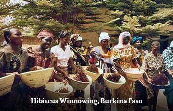 hibiscus-winnowing-burkina-faso-1.jpg