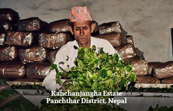 kanchanjangha-estate-panchthar-district-nepal-2.jpg