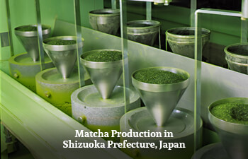 matcha-production-in-shizuoka-prefecture-japan.jpg