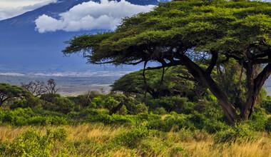 organic-african-tea-1.jpg