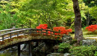 organic-japanese-tea-1.jpg
