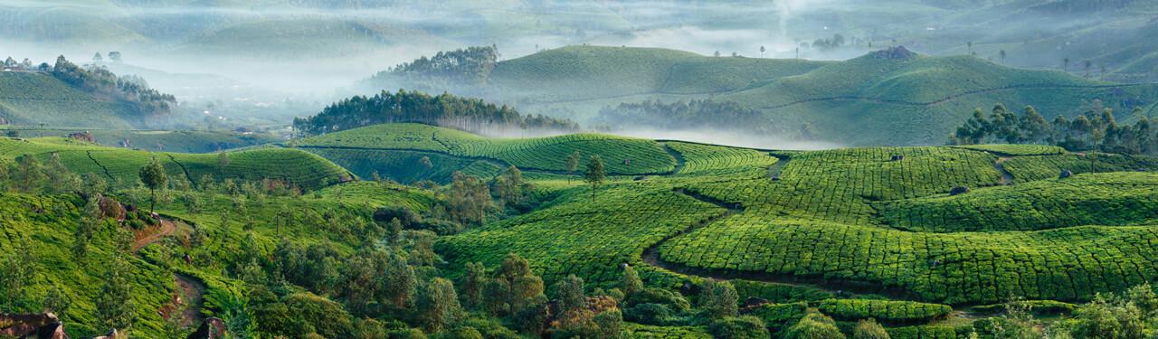 tea-origins.jpg