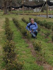 Aubrey at The Great Mississippi Tea Farm